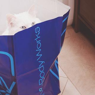 slid-smart-cat