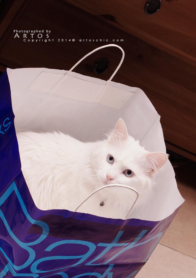 smart-cat-2
