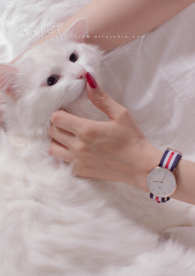 Daniel Wellington wach