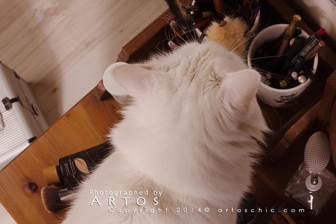 lion-cat3