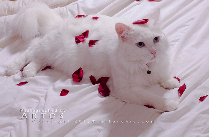 gift-cat